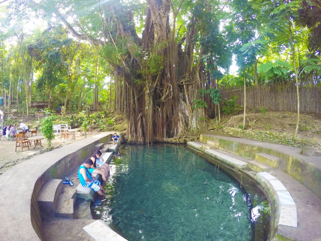 Enchanted Balete Tree